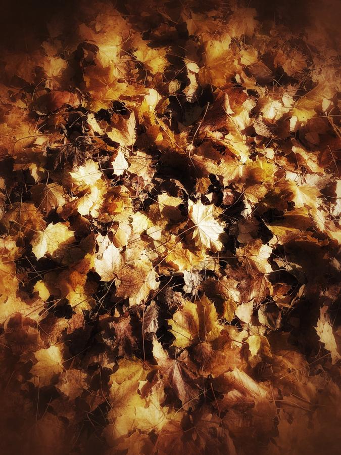 photo artistique feuilles hivernales au sol