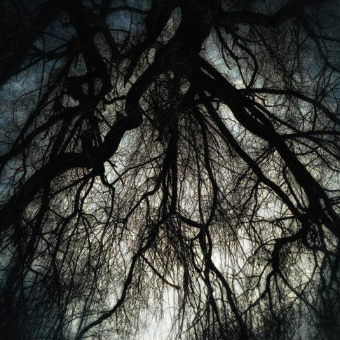 photo artistique nature branche d'arbre crépuscule
