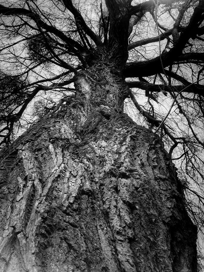 photo artistique nature arbre noir et blanc