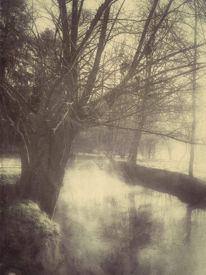 photo artistique nature arbre au bord de rivière argentique