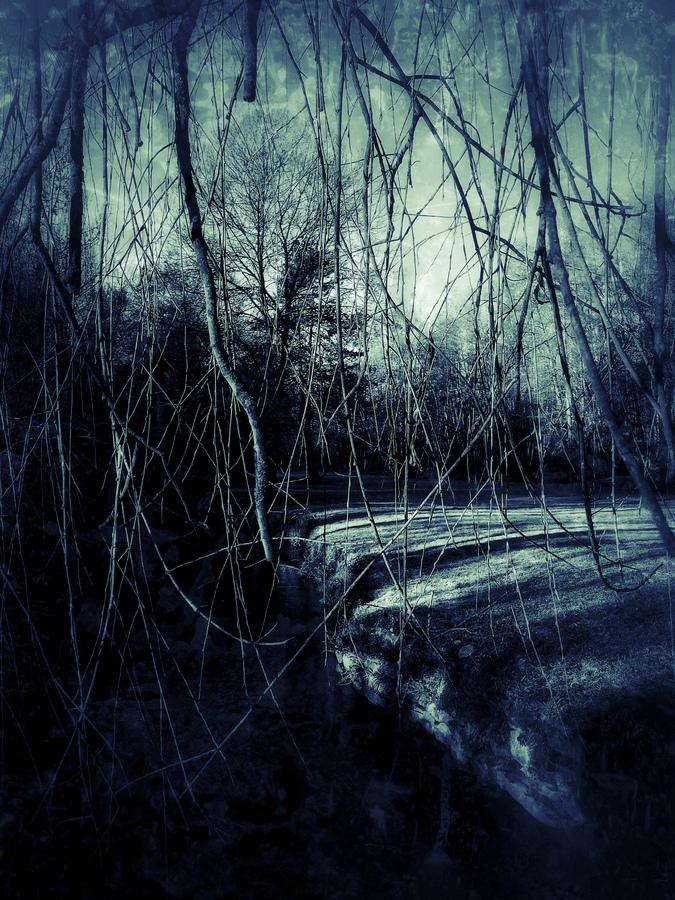photo artistique nature arbre et branches ombre et lumière bleue