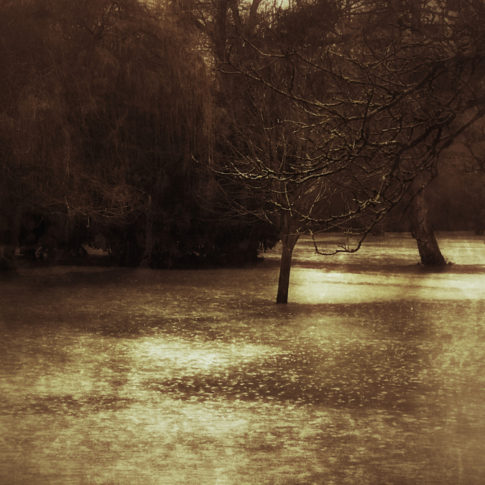 photo artistique nature prairie et champs inondés