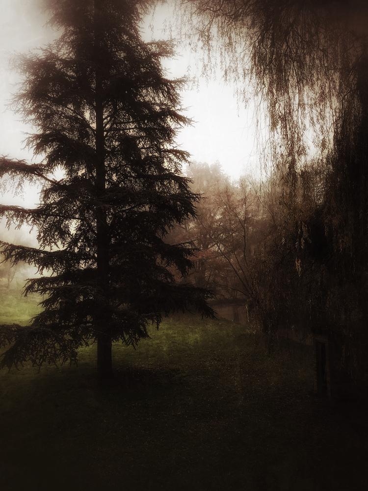Photographie Thalie B Vernet photo d'un arbre dans la prairie